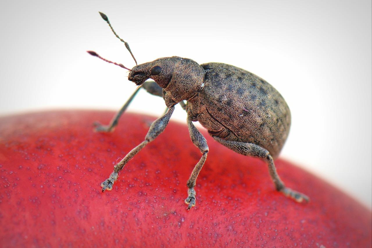 bug-369229_1280